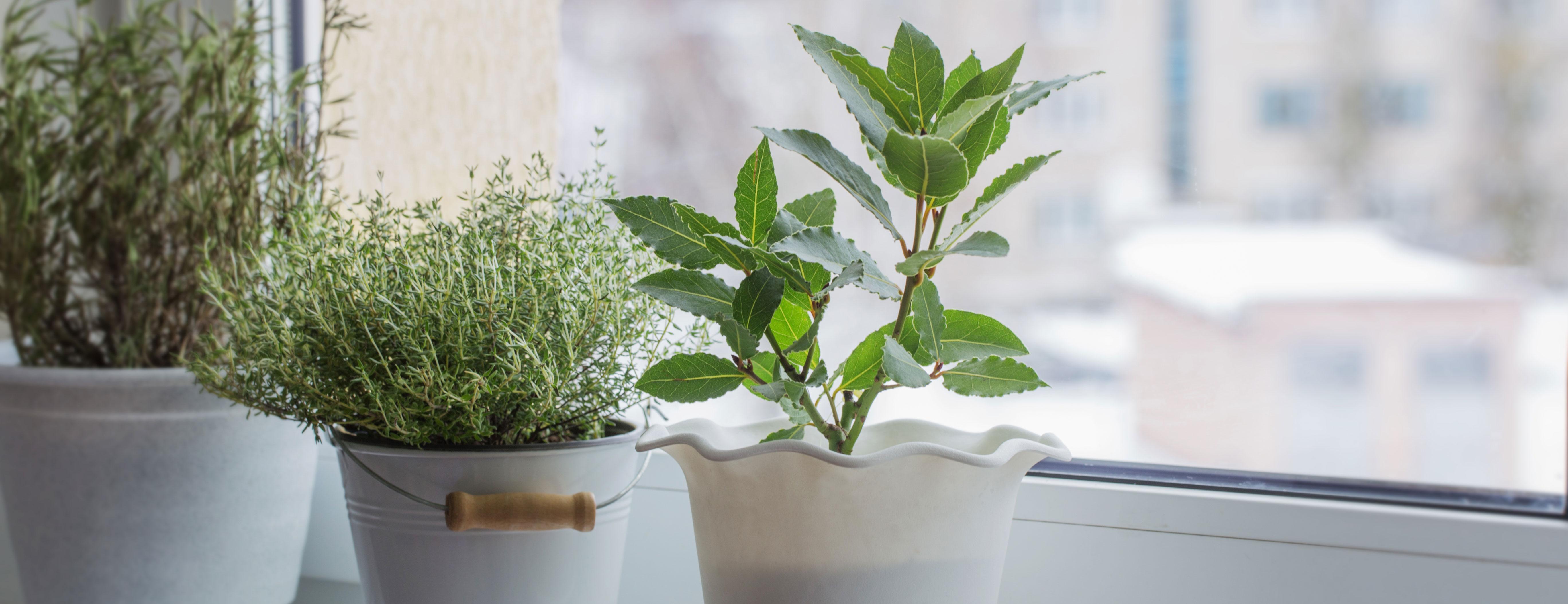 houseplants in windowsill