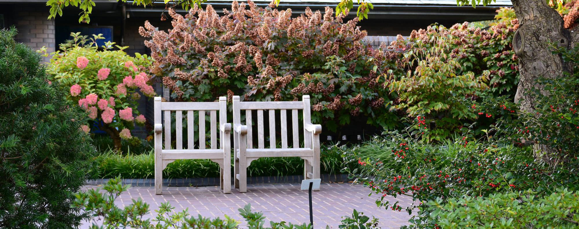 bench surrounded by shrubs and flowering trees
