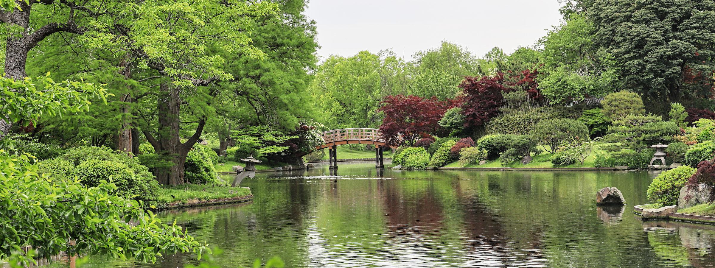 Lush Japanese Garden lagoon with drum bridge in background