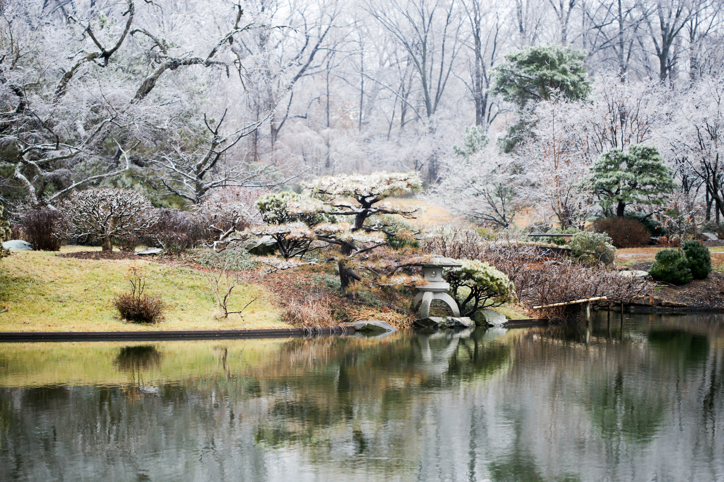 Island shore in winter overlooking Japanese Garden lake