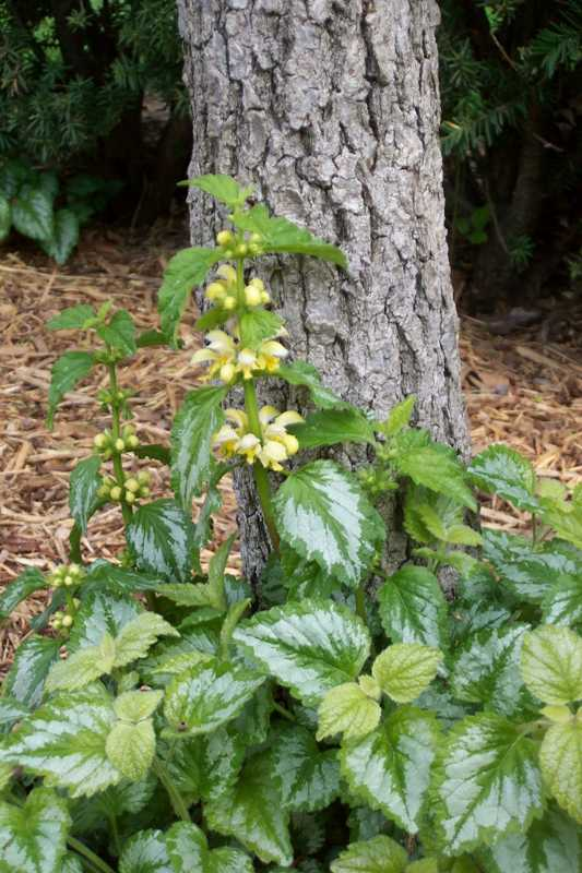 Ten Top Tips For Small Shady Urban Gardens: 10 Best Plants For A Dry Shade Garden With Shrubs