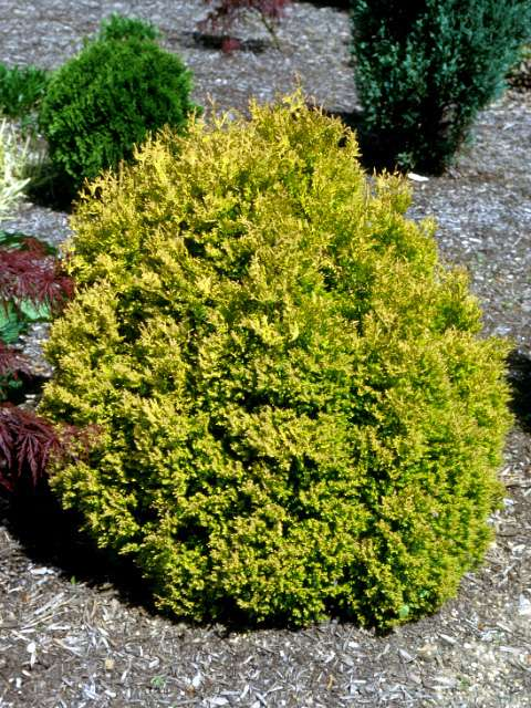 Names Of Bushes And Shrubs