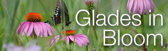 Glades in Bloom