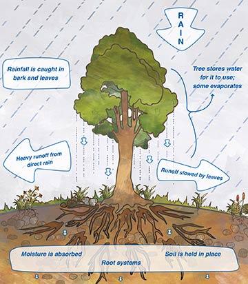 tree_benefits