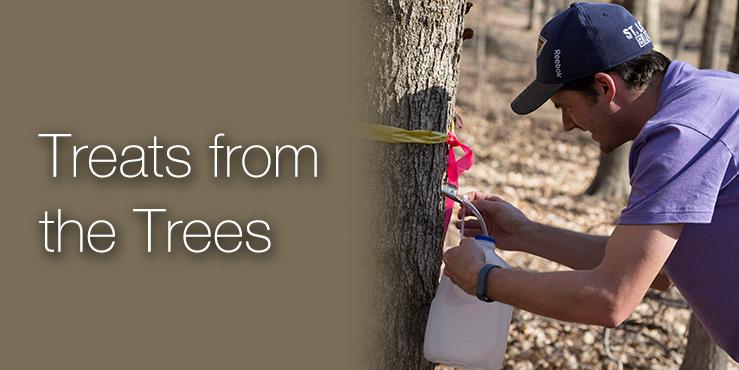 Treats from the Trees