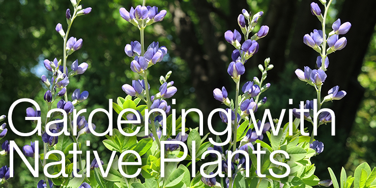 Gardening with Native Plants