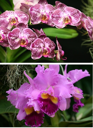 The Orchids Are Ready To Strut Their Stuff