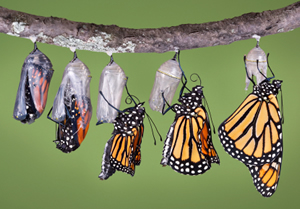 The Magic of the Monarch Butterfly