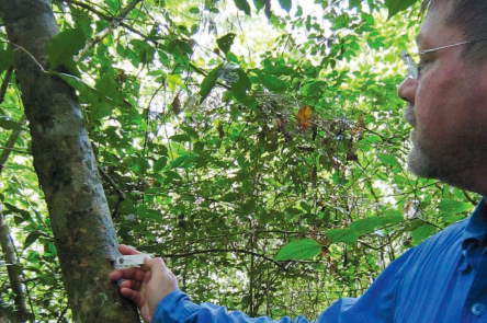 Garden Contributes to Checklist of Amazonian Tree Taxa