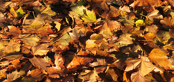 Sustainable Lawn Care Tips for the Fall: Building Healthy Soil for a Healthy Lawn