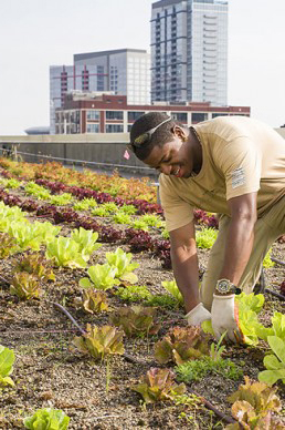 Person gardening on a roof