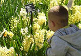 Boy looking at spring flowers