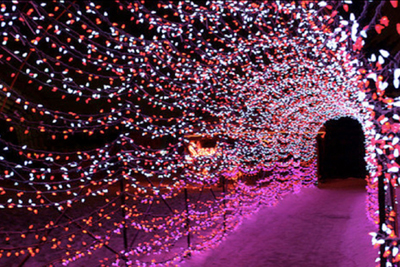 Things To Do On Christmas Eve 2021 Botanical Gardens St.Louis Celebrate The Holidays At The Garden