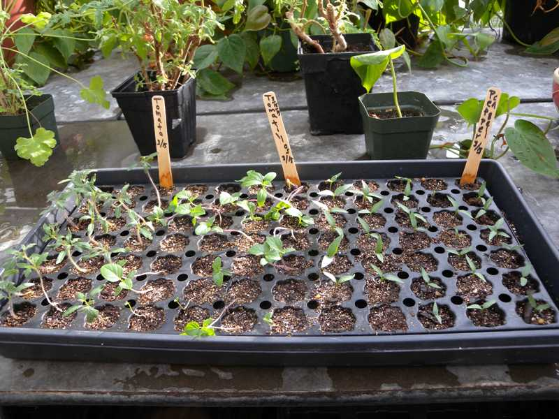 Starting Plants From Seed Indoors