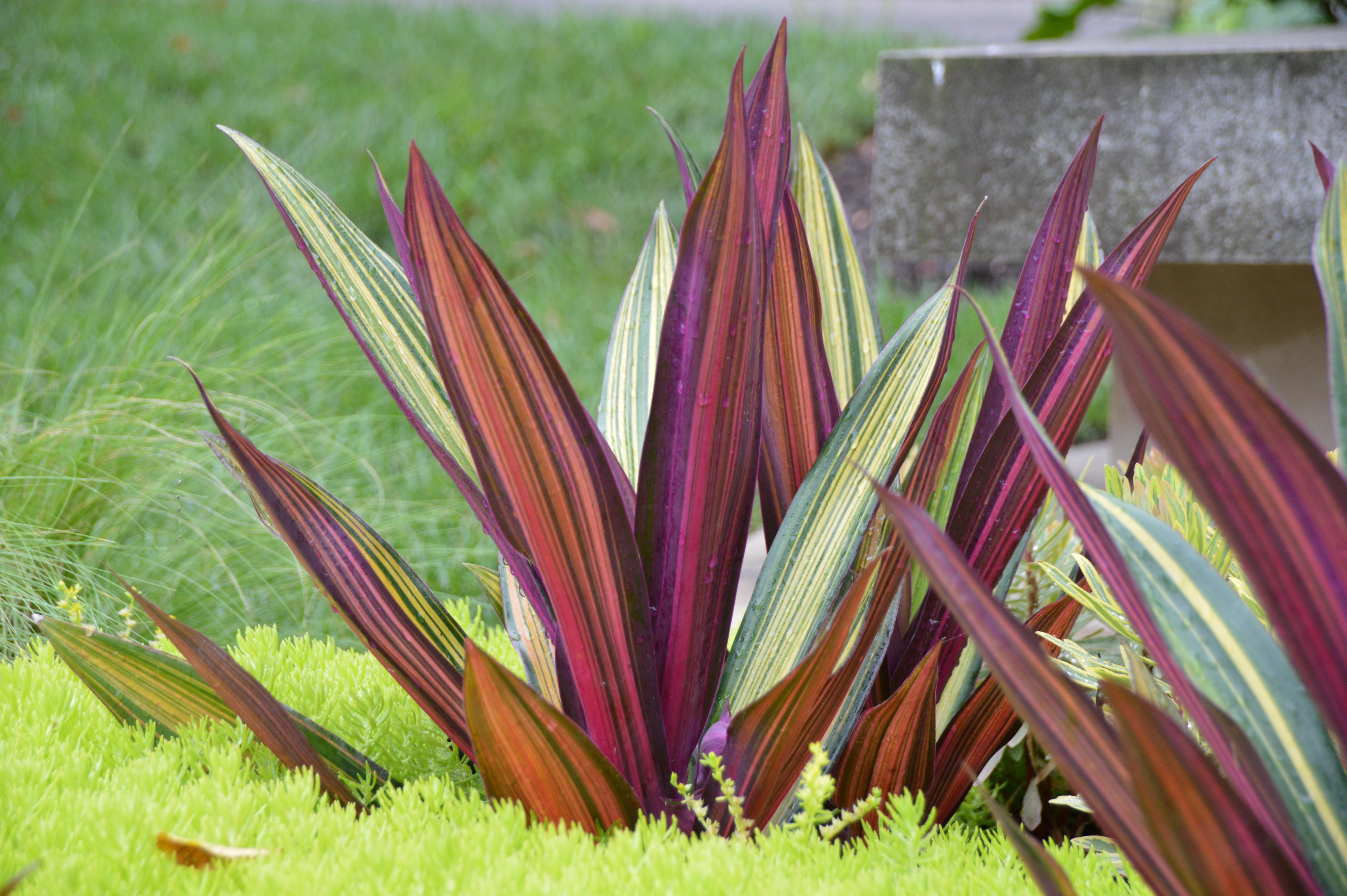Plants Of Merit