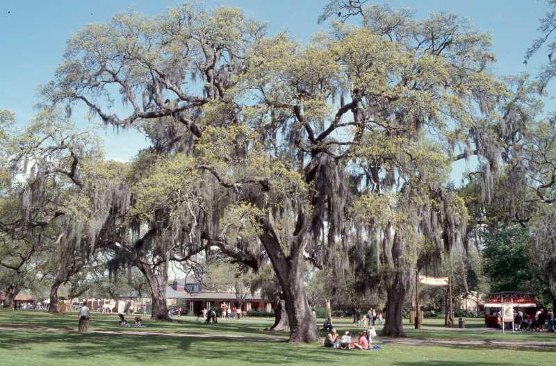Trees for Oklahoma Gardens