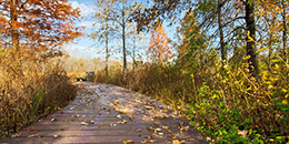 Boardwalk and autumn foliage