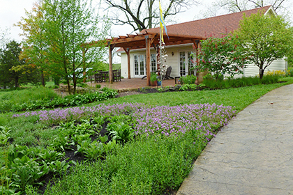 Yard with lawn replaced by a variety of plantings